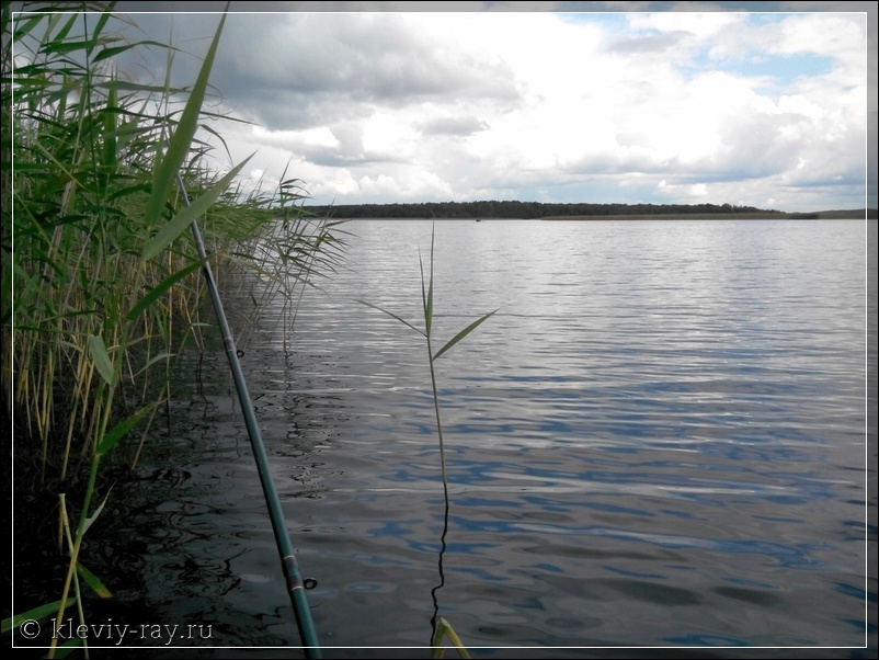 где рыбалка в витебске