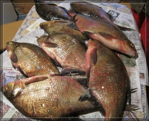 Рыбалка в Беларуси. Озеро Струсто Браславских озер Беларуси