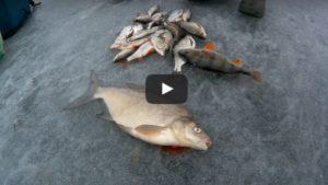 Вяча - рыбалка Беларусь