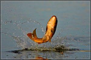 Поведение рыбы можно предугадать по изменению атмосферного давления
